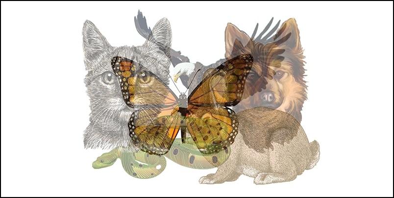 Trắc nghiệm: Con vật nhìn thấy đầu tiên tiết lộ mọi tính cách của bạn: Kẻ kiêu ngạo hay người khôn khéo