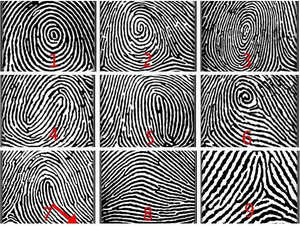 Nhìn vân tay ngón cái đoán chính xác tính cách của một người tới 80 - 95%