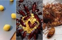 Bẫy gián bằng lòng đỏ trứng gà: Một quả diệt cả trăm con, đảm bảo không bao giờ thấy bóng dáng gián trong nhà