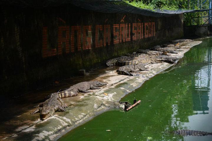 Làng Cá Sấu Sài Gòn