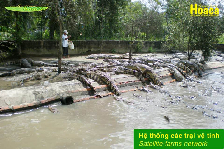 Trại nuôi cá sấu sài gòn quận 12